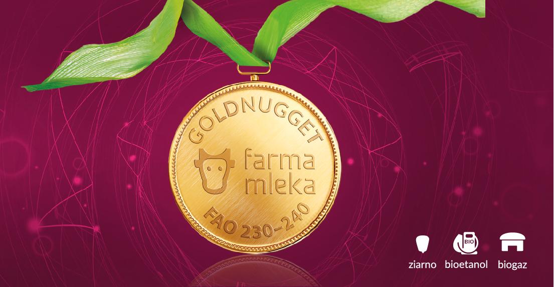 GOLDNUGGET - Kiszonka jak złoto