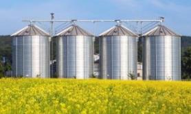 Kontraktacja kukurydzy