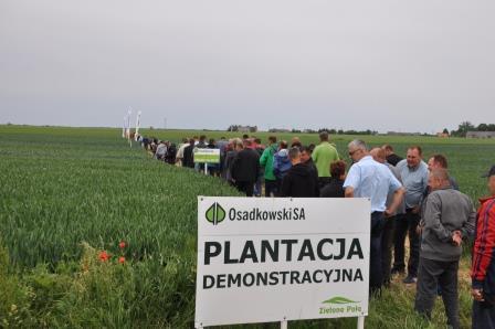 plantacja demonstracyjna