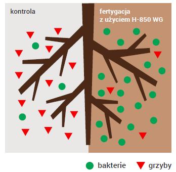 Stymulator roślin
