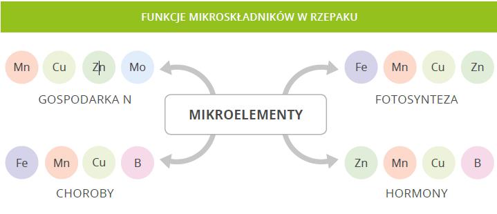 Rzepak - mikroelementy