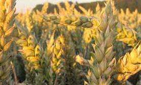 jakie nasiona