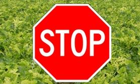 nielegalne środki ochrony roślin