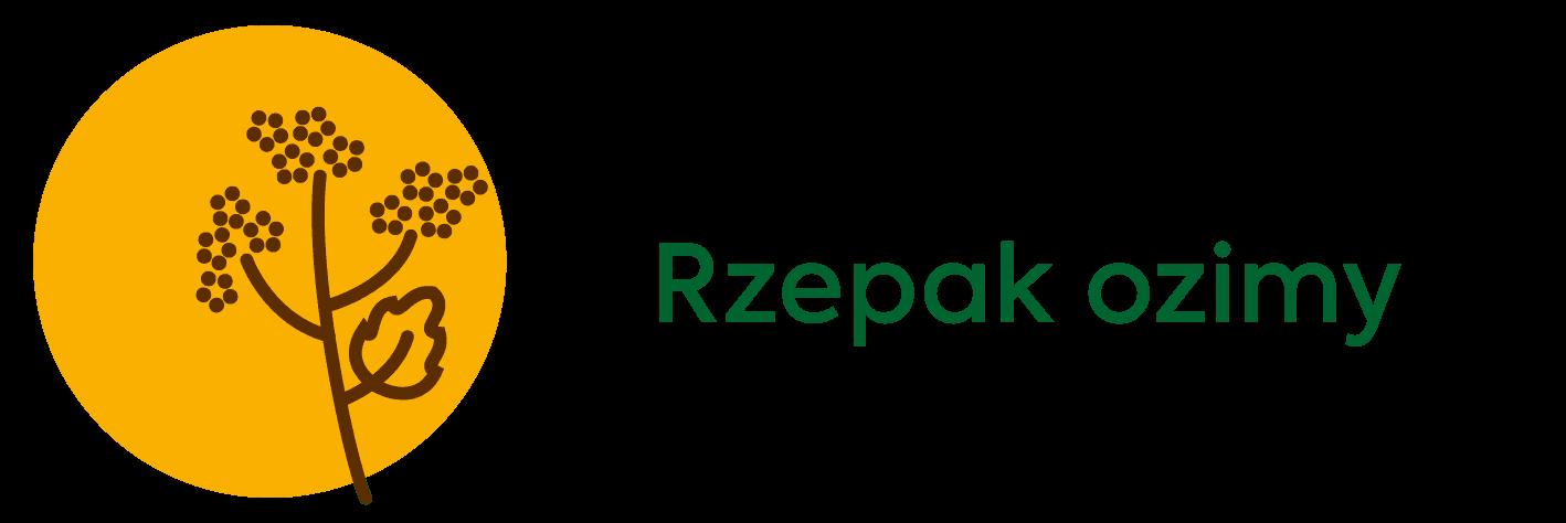 Osadkowski-rzepak