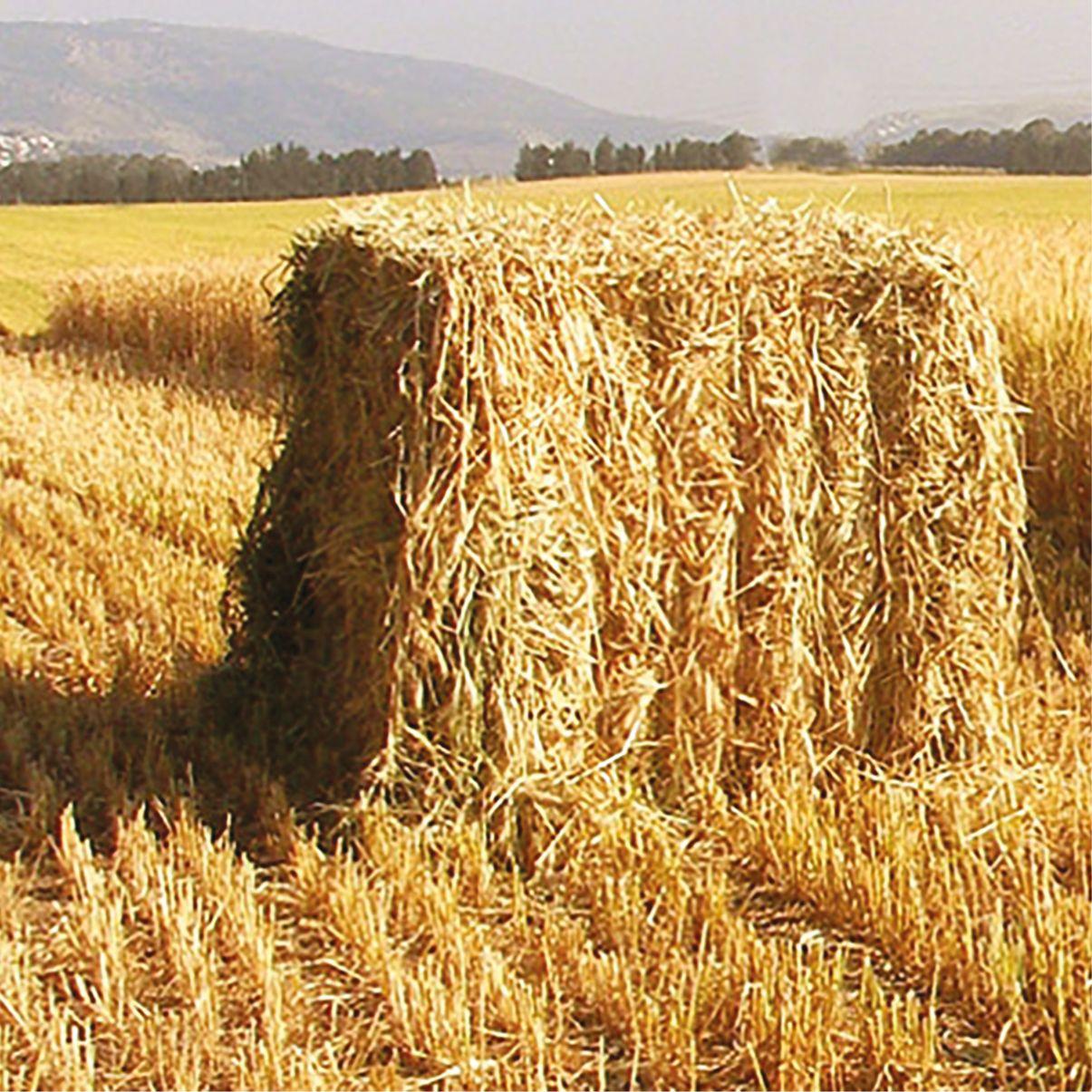 sznurek rolniczy