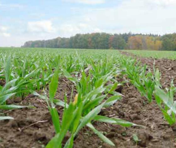 jesienne-zabiegi-herbicydowe-fot2