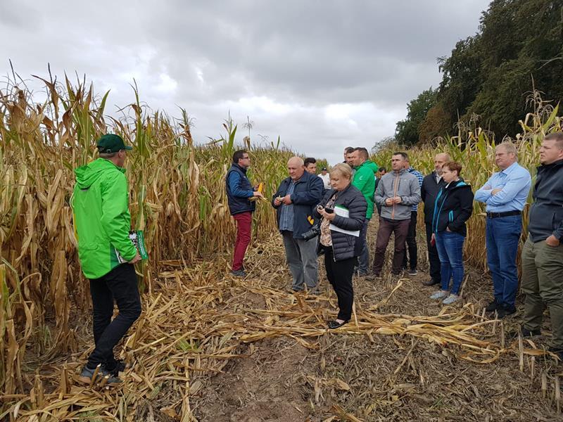 zielone pola kukurydza 2019