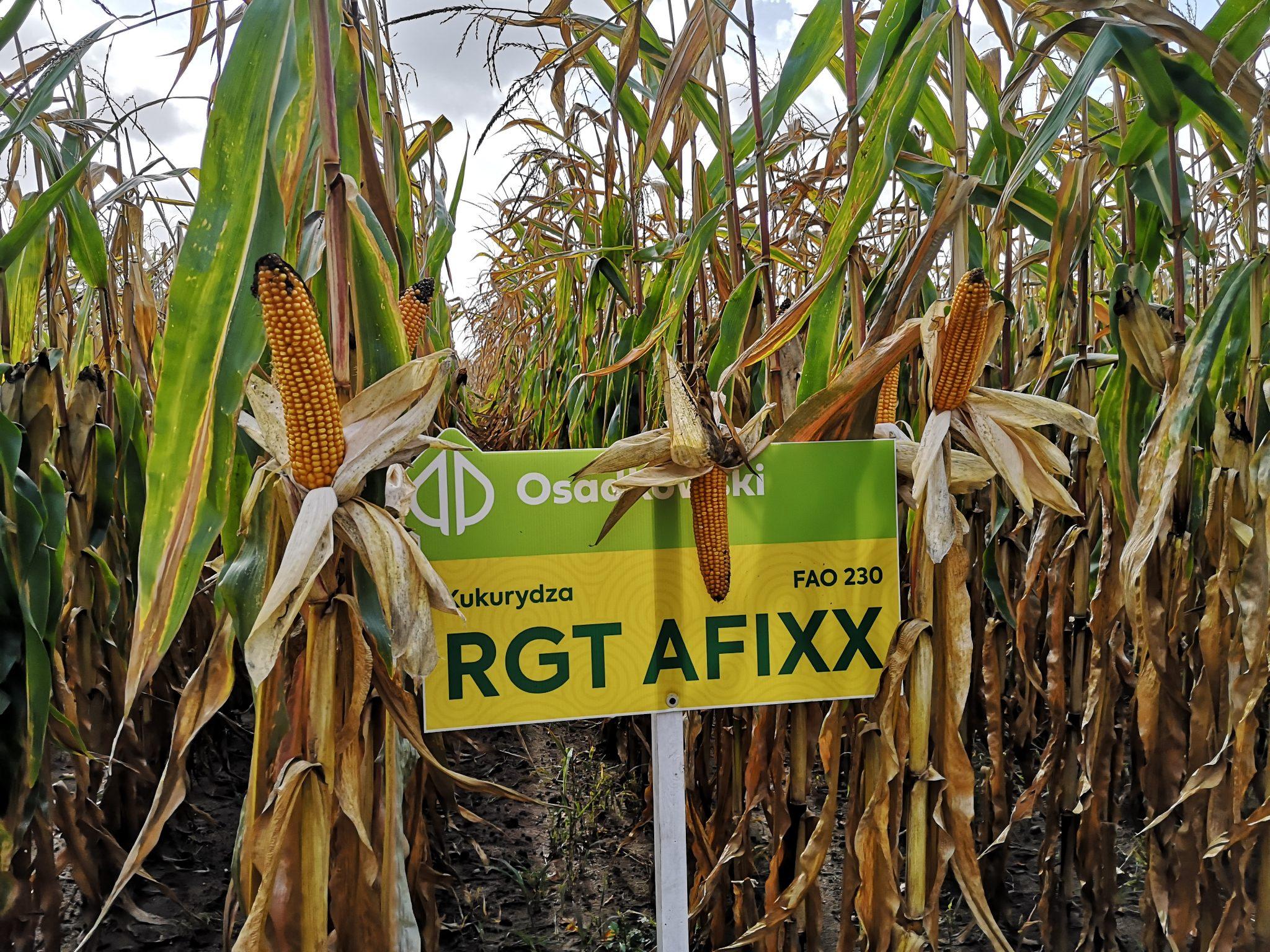 RGT Afixx na polu