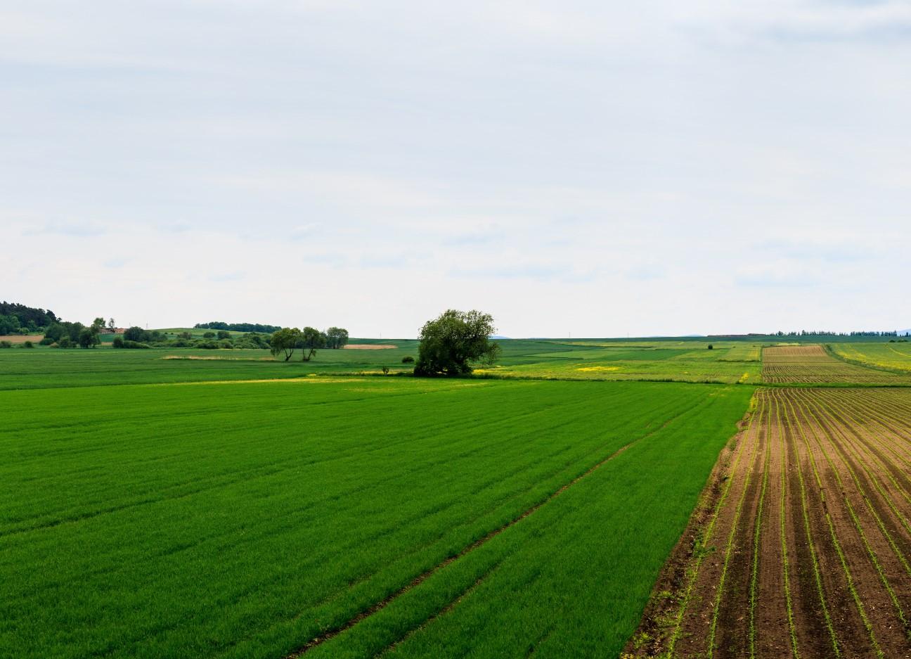 pole nawozy azotowe