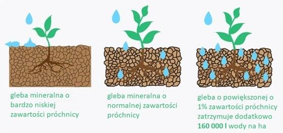Wpływ przyrostu ilości próchnicy na pojemność wodną