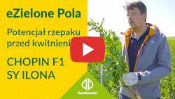 eZielone Pola #4 | Potencjał rzepaku przed kwitnieniem: Chopin F1, SY Ilona