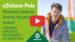 eZielone Pola#5 | Pszenice dobrze bronią się przed suszą: Hondia, Apostel, RGT Depot, SY Orofino