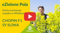 eZielone Pola #7 | Rzepak ozimy - pełnia kwitnienia w Wielkopolsce. SY ILONA, CHOPIN F1