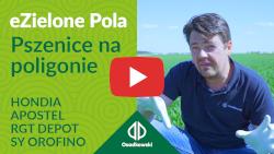 eZielone Pola #8 | Pszenica na poligonie; Hondia, Apostel, RGT Depot, SY Orofino