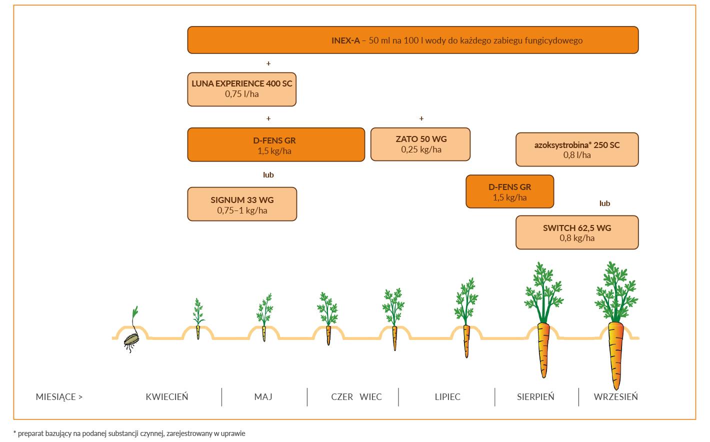 Marchew _ Zabezpieczenie fungicydowe