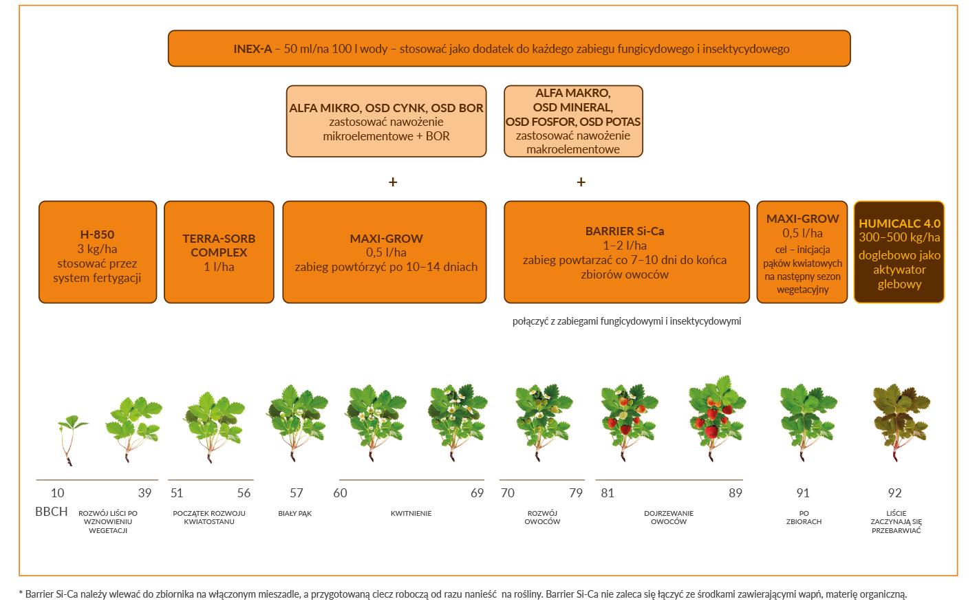 Truskawka _ Technologia DSG i stymulacja truskawki gruntowej