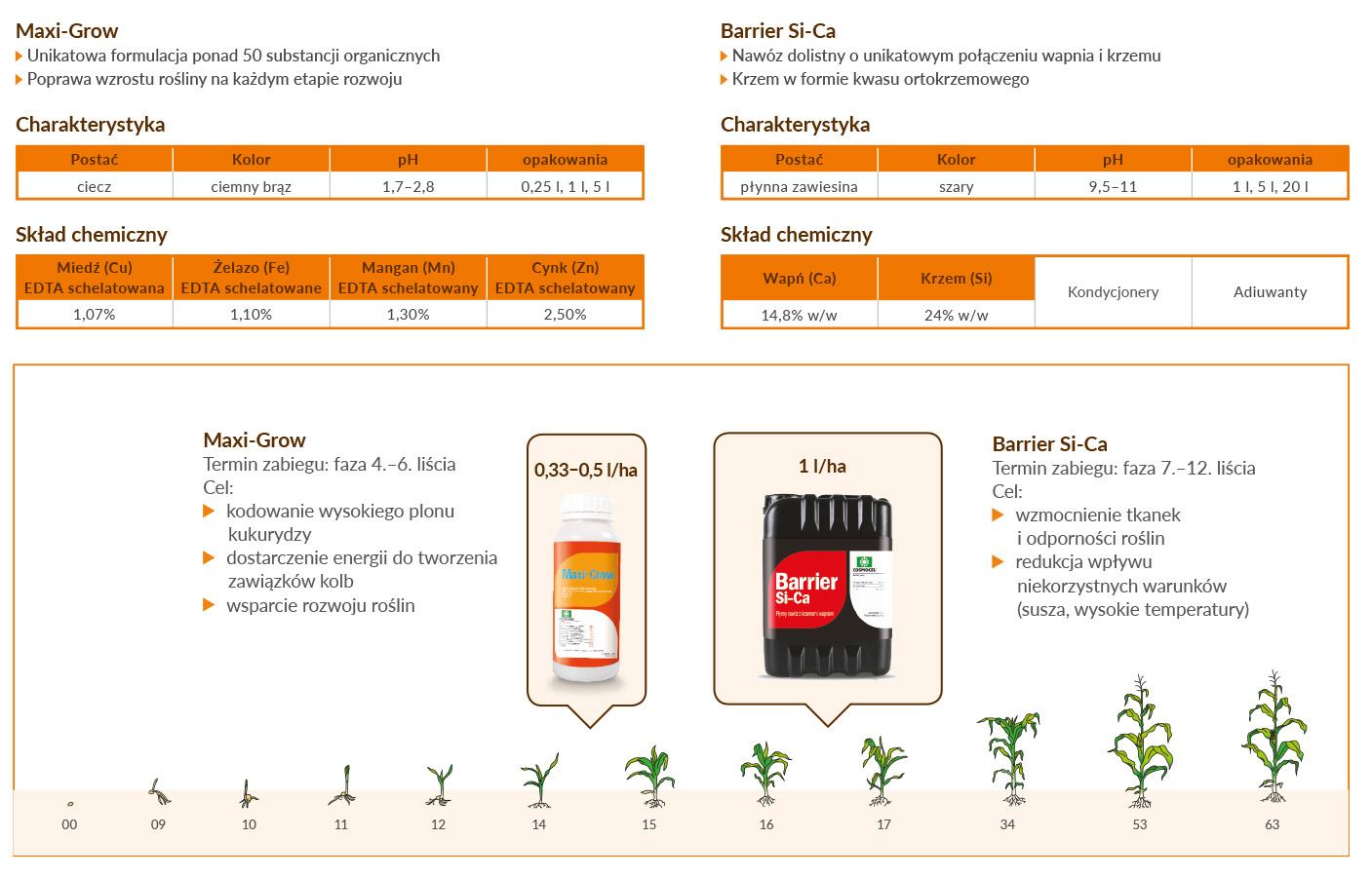 kukurydza-schemat-01