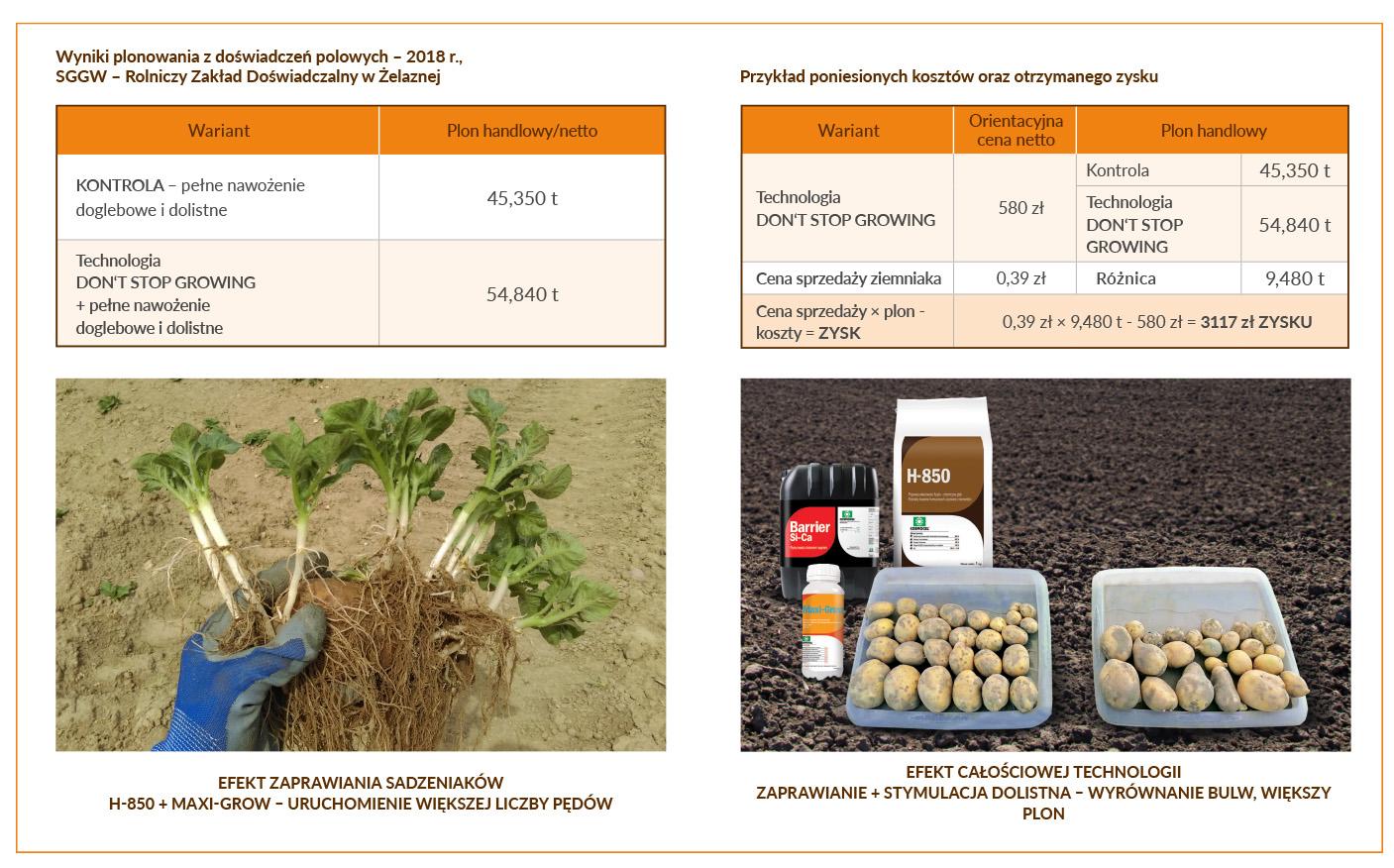 ziemniak-schemat-07